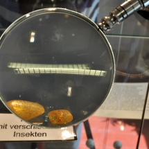 bernsteinmuseum_07
